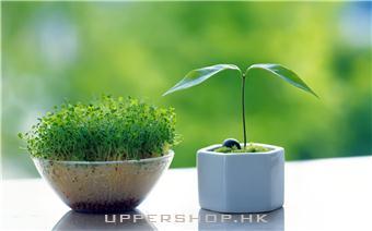室內養生植物你知幾多_旺角室內養生植物店