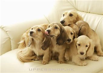 香港寵物護理來樓上_九龍寵物美容店
