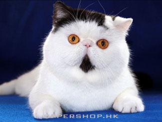 【貓咪美容】點樣給貓咪修理趾甲
