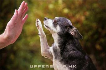 狗狗邁入樂齡期的老化徵兆