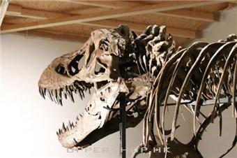 12米長暴龍化石即將登陸中環 6月免費睇恐龍展覽!