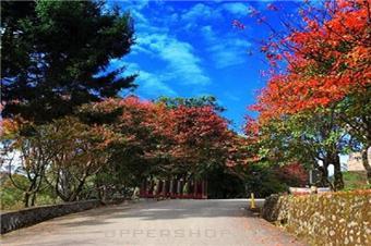 【秋楓特賞】台灣10-11月旅遊推薦,不出國也能享受秋天之美,台灣8大賞楓祕境!