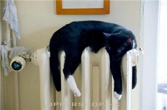 幫寵物保暖之餘,謹記3大原則避免保暖物品釀成意外