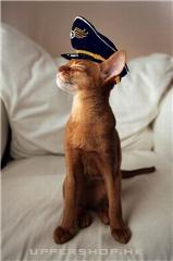 貓貓隊長!!