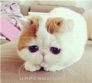 在貓咪寵物店買咗一隻萌萌嘅貓咪