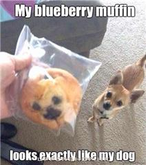 my muffin & my dog