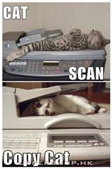 scan cat vs copy cat