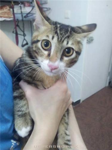帶貓貓去寵物店美容
