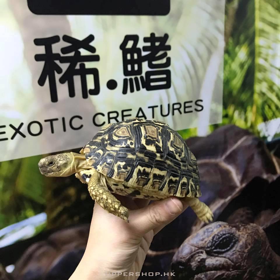 稀.鰭 - 龜類.爬蟲專門店
