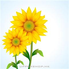 向日葵僱傭有限公司Sunflower Consulting Limited