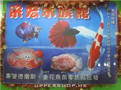 采宏水族館