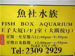 魚社水族Fish Box Aquarium