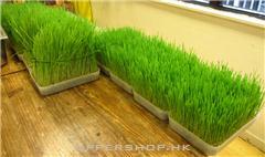 綠紀元生機店Green Age Biogenics