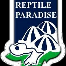 爬蟲地帶Reptile Paradise