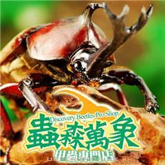 蟲森萬象甲蟲專門店Discovery Beetles Pro shop