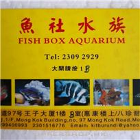 魚社水族Fish Box Aquarium