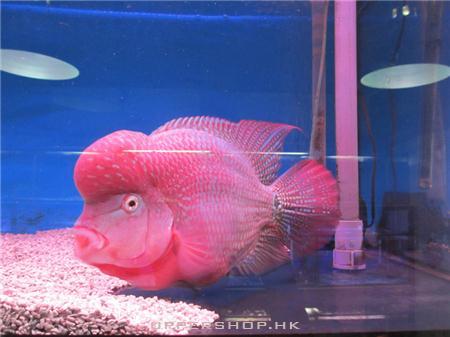 Focus 熱帶觀賞魚