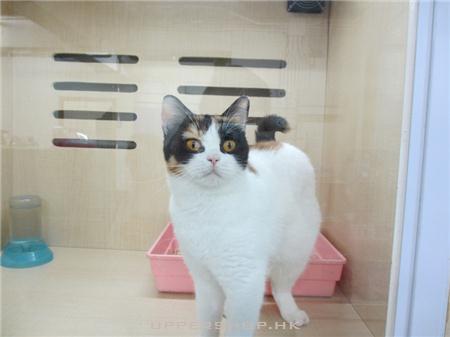 貓之谷寵物店