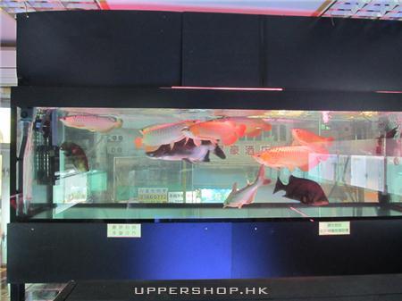 魚意觀賞魚專門店