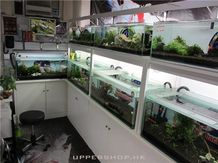 短鯛世界水族公司