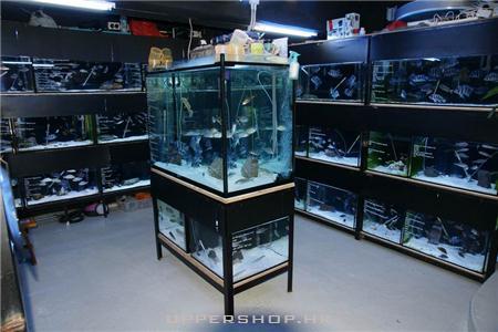 Ken's Aquarium Forum