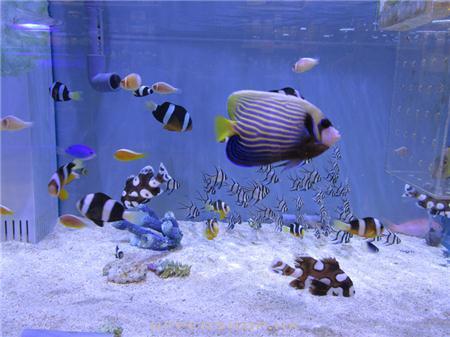 蓝地球(香港)有限公司 blue planet aquahouse (hk) ltd
