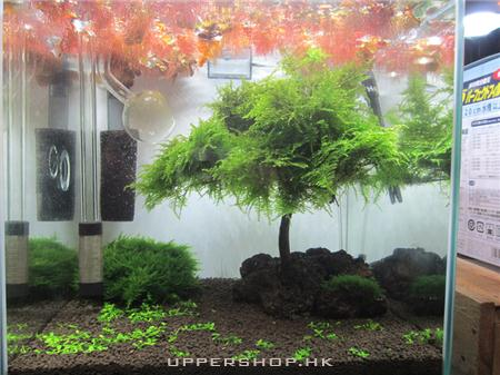 CO2 Aquarium Shop