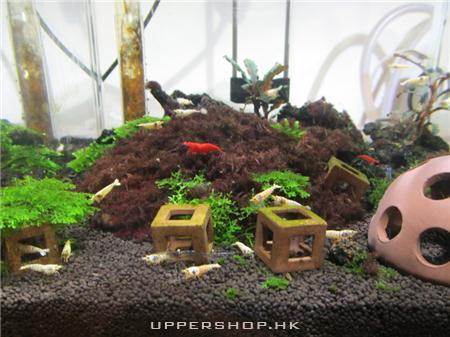 CO2 Aquarium Shop 商舖圖片4