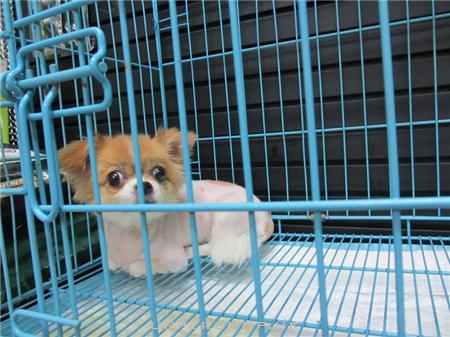 霹靂狗寵物美容專門店 商舖圖片5