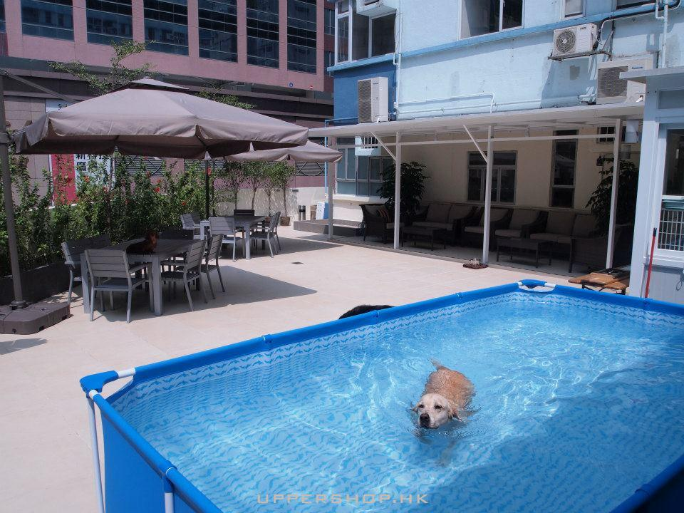 Dog Dept. Pet Hotel & Club圖片