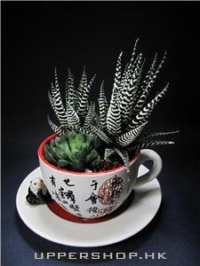 養生室內植物
