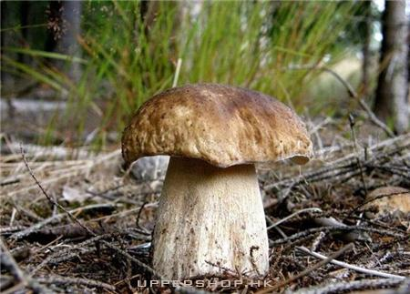 珍菌天下野生食用菌專賣