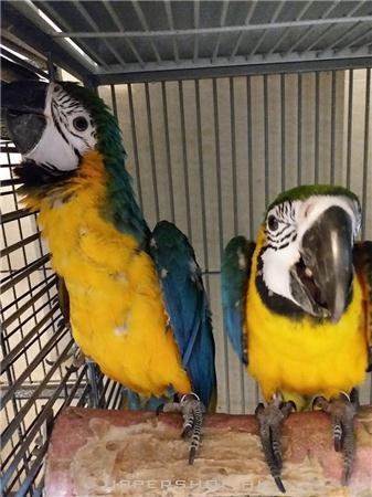 Bii 鸚鵡店