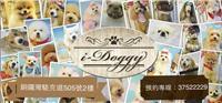 i Doggy Pet House 商舖圖片4
