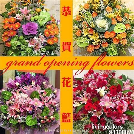 Living Colors - Florist