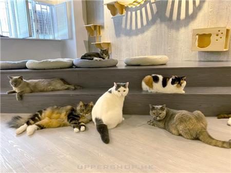 貓CatPlay