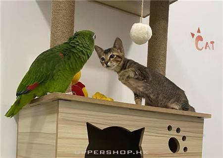 Cat Garden-猫ノ庭