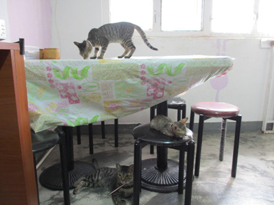 猫Café圖片