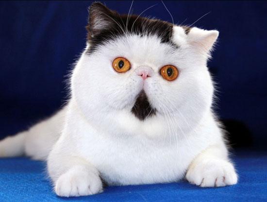 貓咪寵物美容店